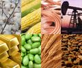 Commodities photo 22.jpg